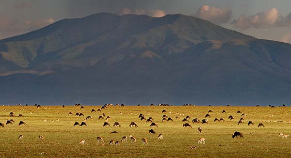 Afrika, Tansania, Serengeti