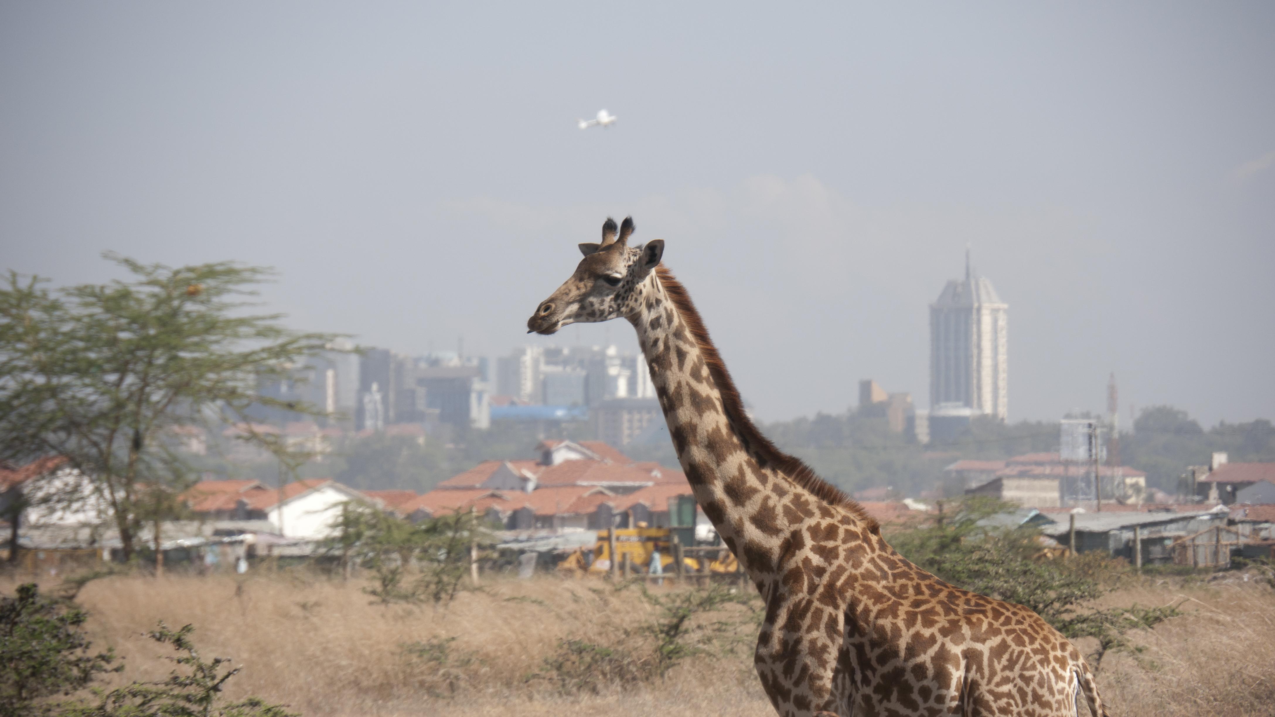 Wild Nairobi -2