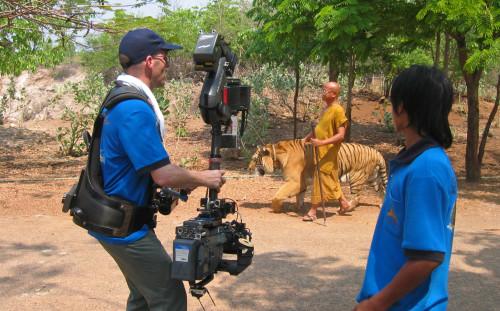 Tiger Thailand