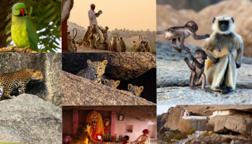 leopard rocks collage
